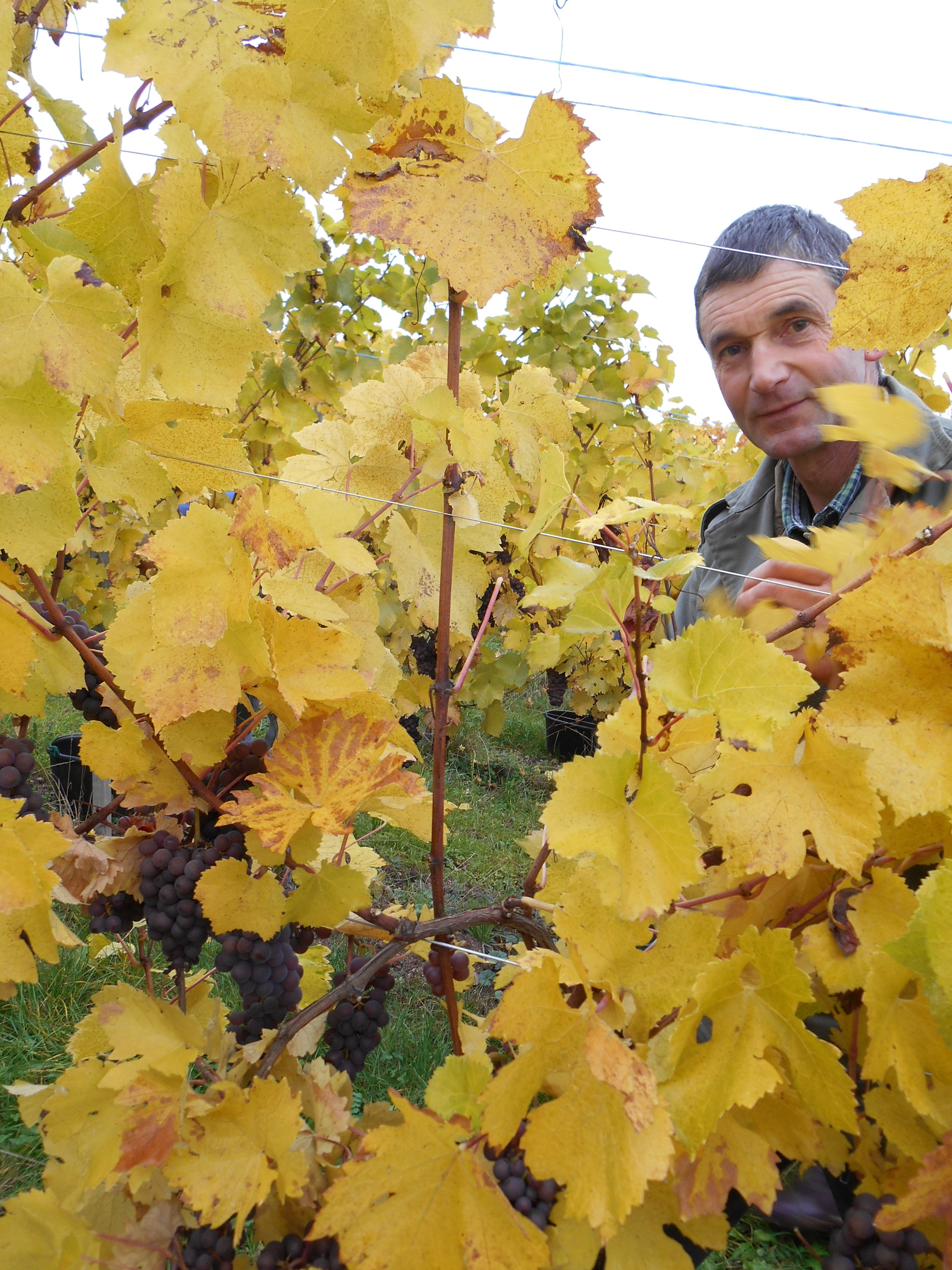 Pierre et ses Pinot Gris