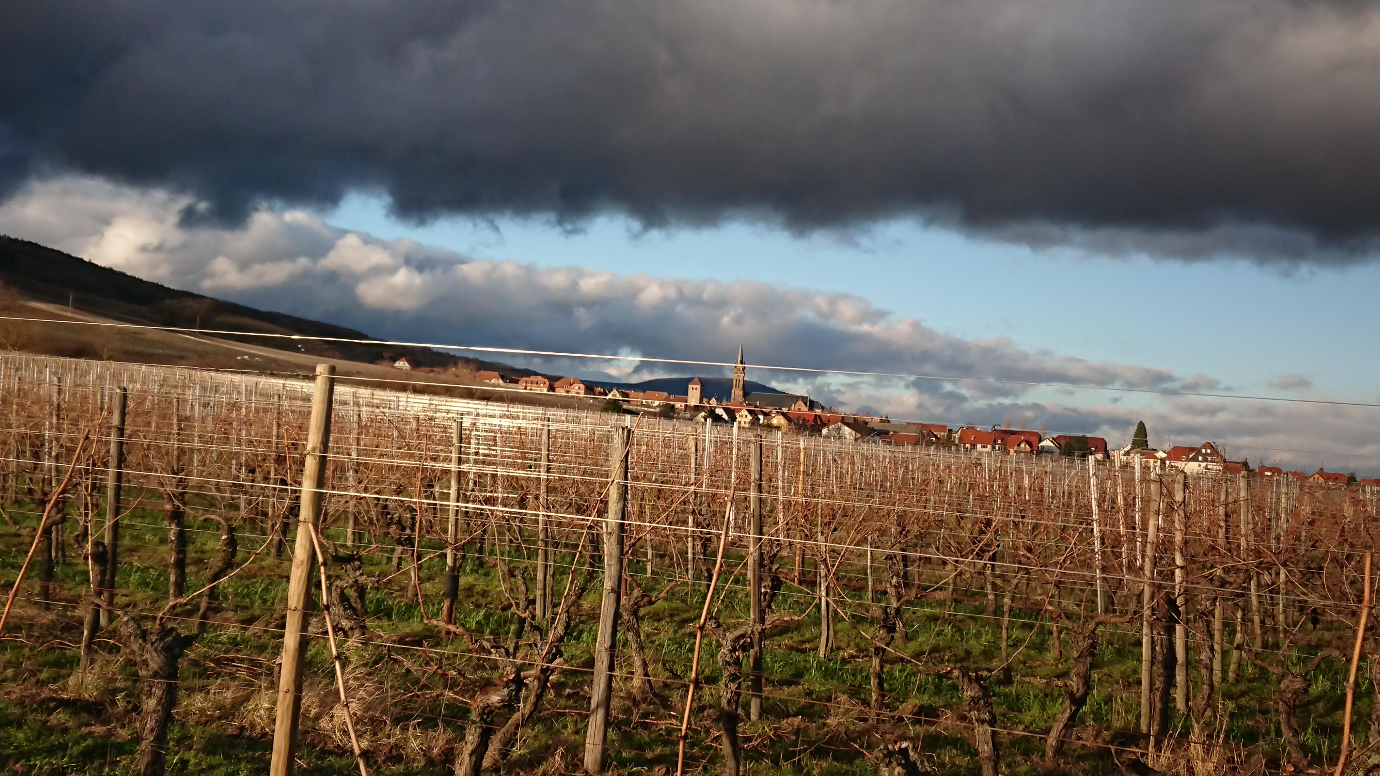 Une nouvelle année, un nouveau cycle pour la vigne !